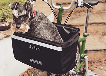 Why Did I Choose Brompton, schnauzer, Brompton Bicycle